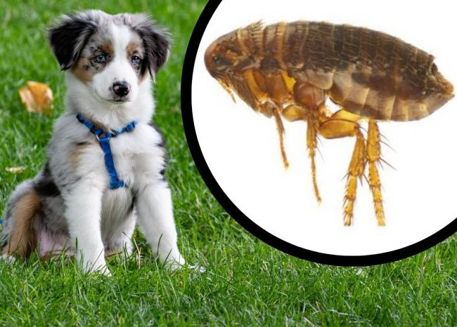 How to avoid 'killer' fleas and ticks in dogs during the summer heatwave. Picture: Newsquest