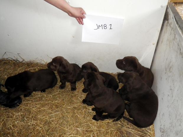 Puppies at Bentley Hall Farm