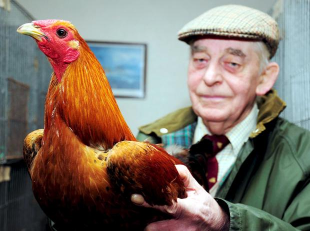 This Is Lancashire: Bob Kane, from the Wirral, with his ginger bird