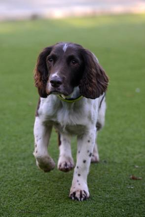 Microchip pets urges Burnley vet