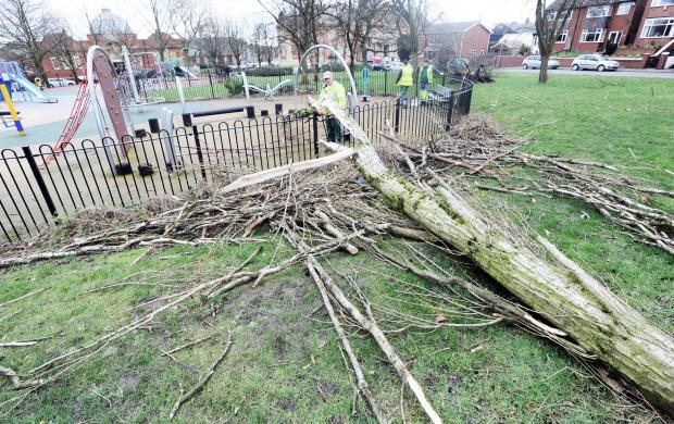 This Is Lancashire: A fallen tree at the children's playground in Farnworth Park.