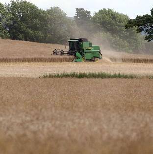 A report shows UK agriculture'