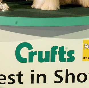 Lion-hearted Ginge goes for Crufts