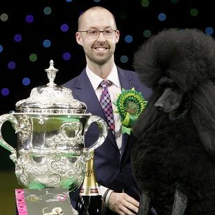 Two-year-old standard poodle Ricky with his handler Jason Lynn, after winning the world's most prestigious dog show