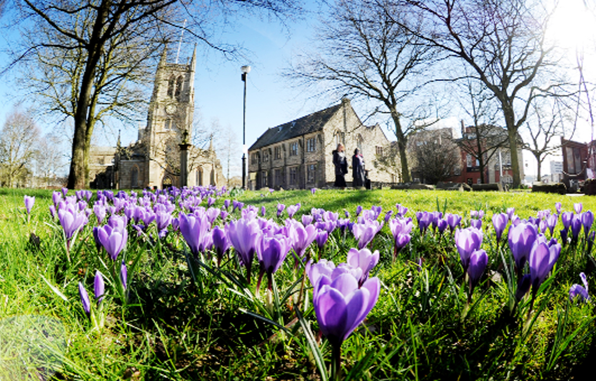 Crocuses in the sunshine at Blackburn Cathedral. Picture: Paul Heyes