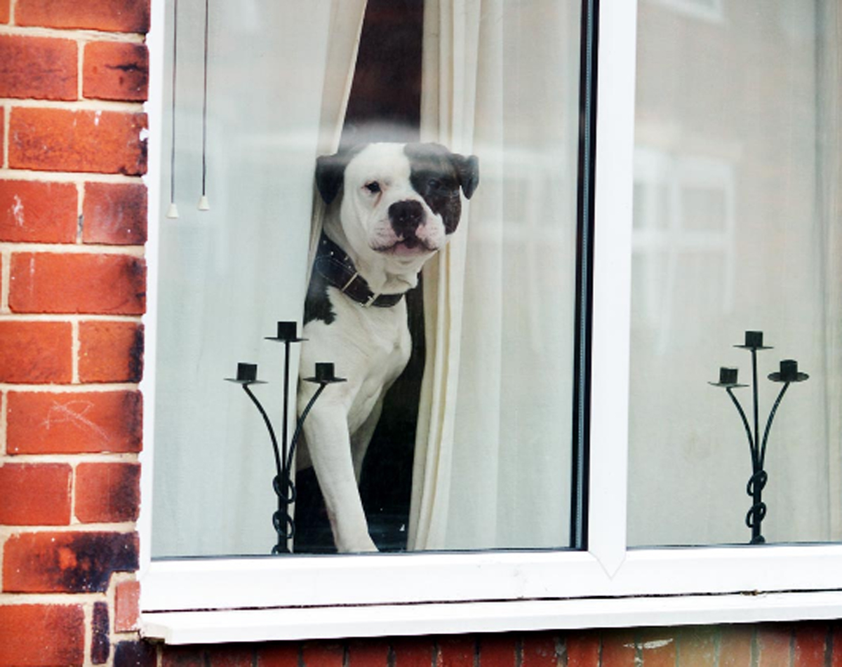 Winston, the dog at the centre of the incident which has led to action by Royal Mail staff