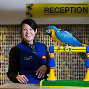 This Is Lancashire: Charlie the parrot chats with receptionist Amber Dixon at the Legoland Windsor Resort Hotel in Berkshire.