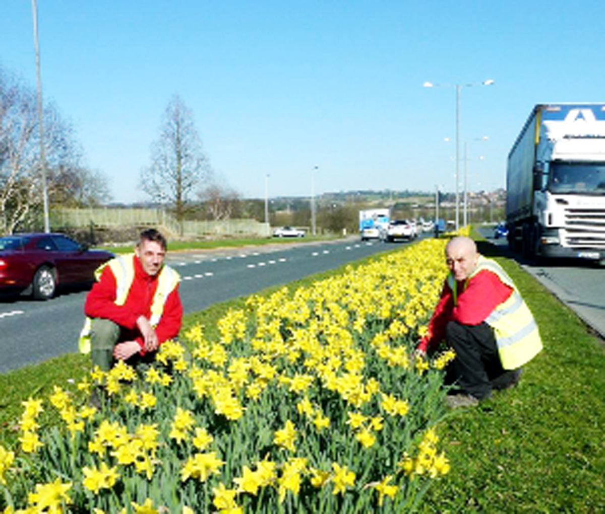 IN BLOOM: Chorley Council Streetscene workers Paul Marsh, left, and Dave Pennington with the daffodils on Millennium Way, Chorley