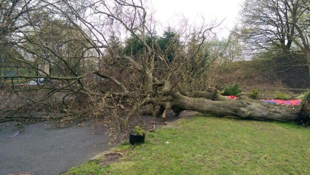 Four hurt after tree uprooted outside pub