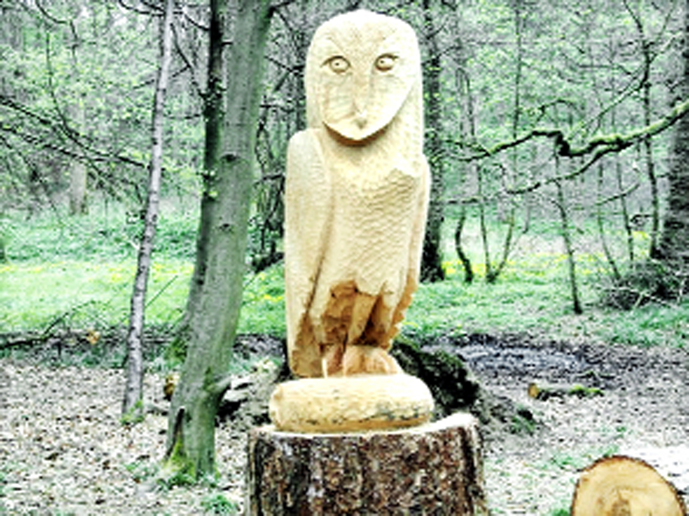 Mystery sculptor adds magic to woodlands in Chorley