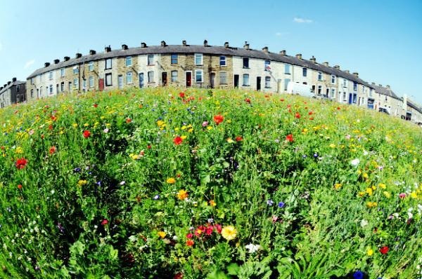 The wildflower meadow off Parliament Street, Burnley       Picture:PAUL HEYES