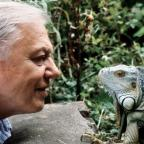 This Is Lancashire: Sir David Attenborough at 90: 11 of his best moments to remember