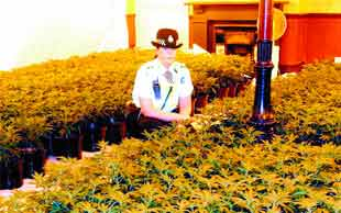 FLASHBACK: Police discovered a huge cannabis farm at the former Duke of York Pub in Colne Road, Burnley