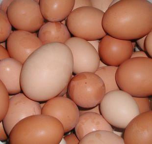 This Is Lancashire: Shopkeepers ban youngsters from buying eggs