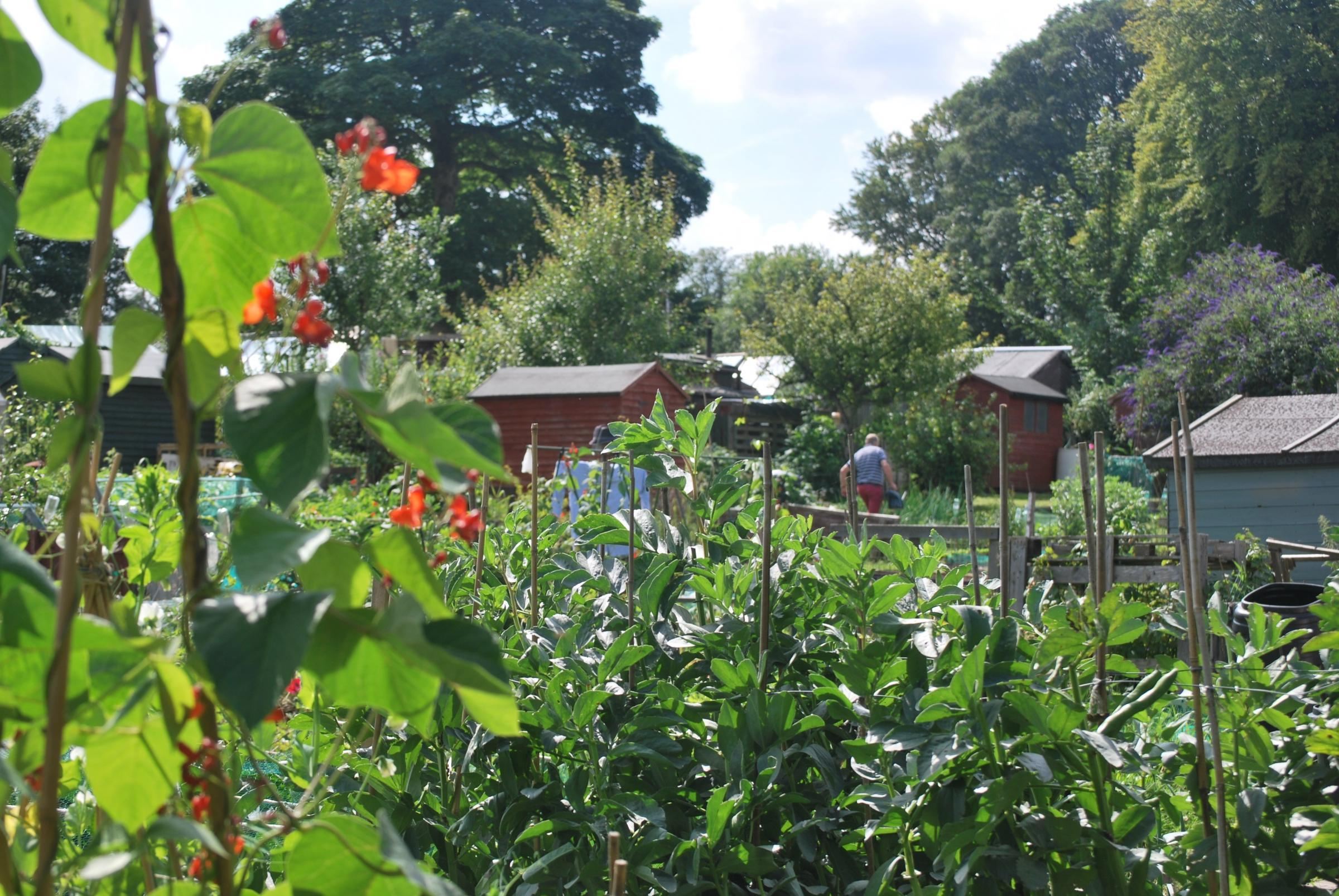 TARGETED: The Harpers Lane allotment site