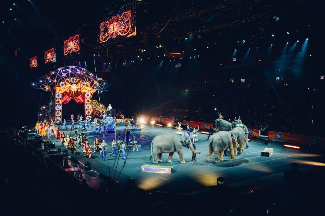 The government has announced a ban on wild animals in circuses